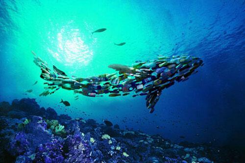 科学家首次拍摄到浮游生物吃塑料
